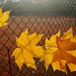 Arbeitseinsatz Herbst